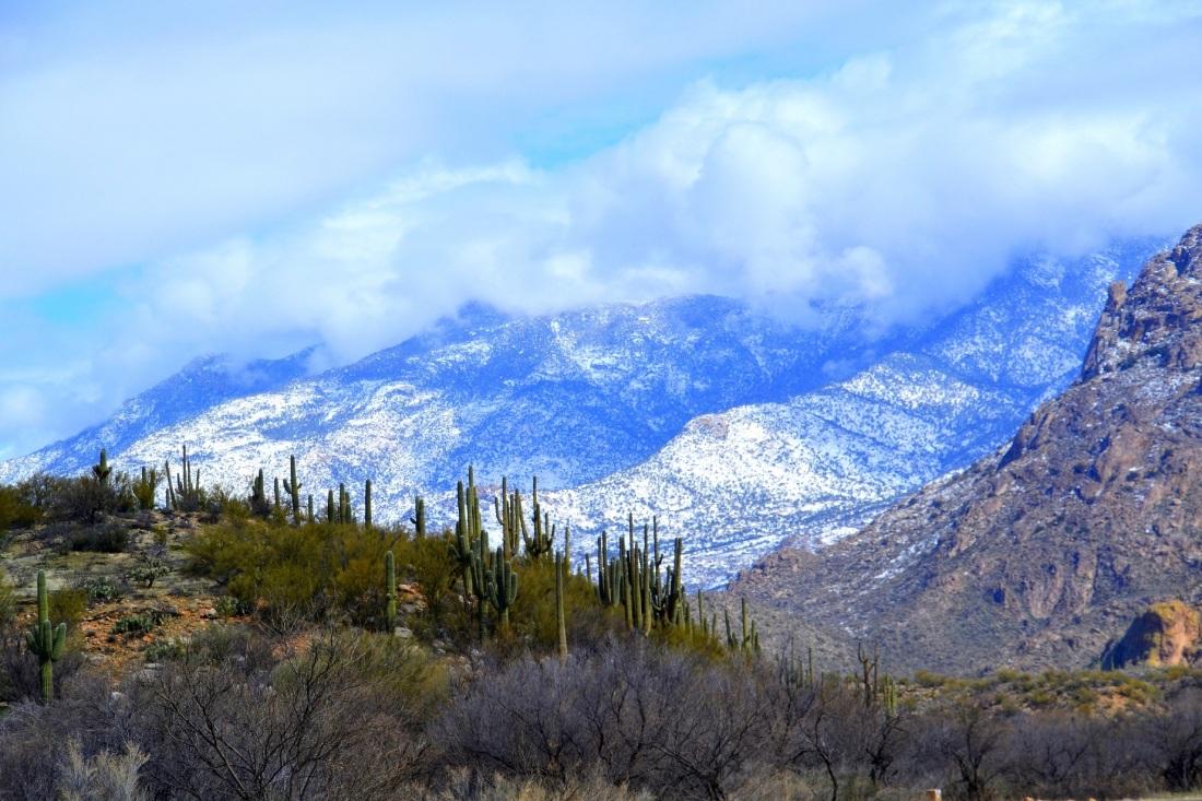 AZ desert winter scene